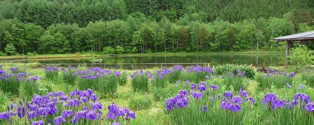 あやめ公園池(菅大平ため池)